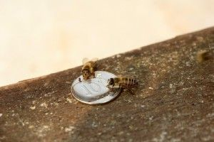 Limpiar monedas con abejas