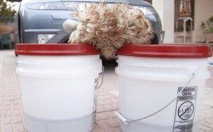 Cubos de limpiar coches